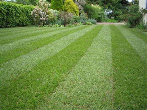 lawn free backyard lawn stripey 1mg1 landscaping in killeen killeen landscaping