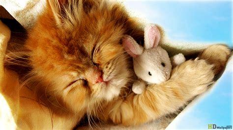 baby kittens wallpaper wallpapersafari