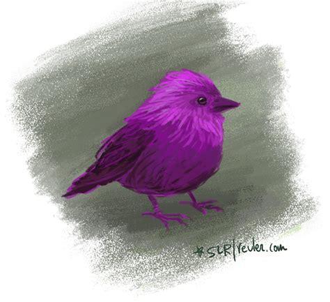 Bird Purple by Purple Bird Sketch Lynne Reul