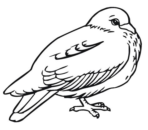 coloring pages of birds to print free printable pigeon coloring pages for kids