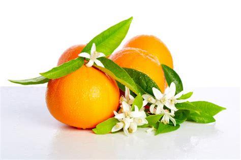 fiori d arancio propriet 224 e significato delle zagare