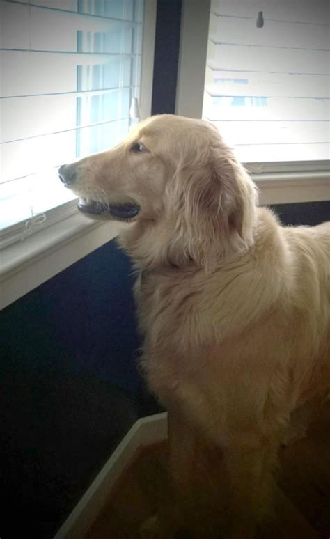 golden retriever petco former petco workers charged in s in drying cage ny daily news
