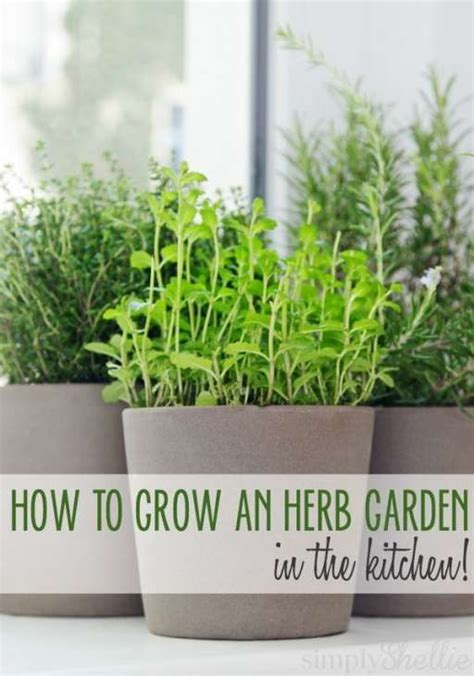 how to grow fresh herbs in your kitchen best 25 herb garden indoor ideas on indoor herbs growing herbs indoors and herbs