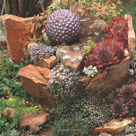 I Love This Wow Dream Home Pinterest Cactus Rock Garden