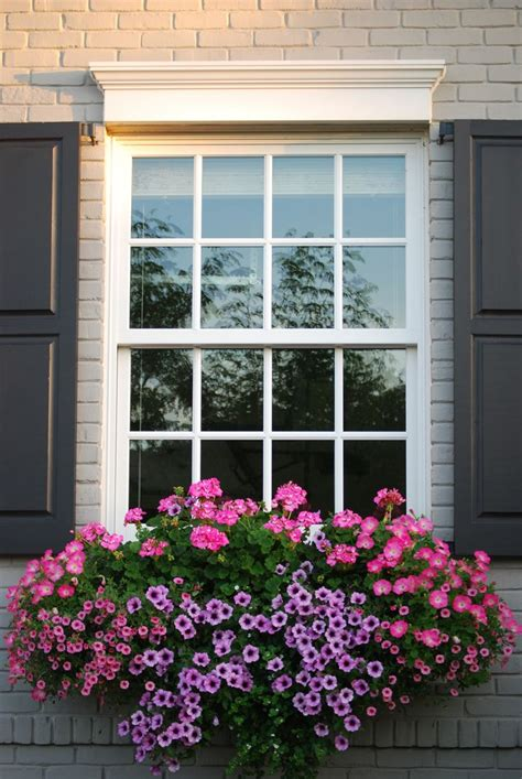 window flower box 25 best ideas about window box flowers on