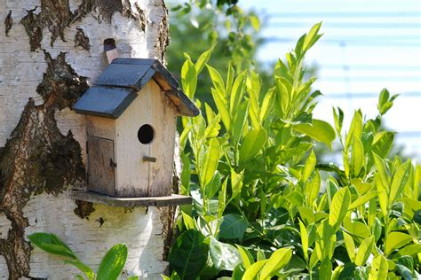 bird house ideas joy studio design gallery best design