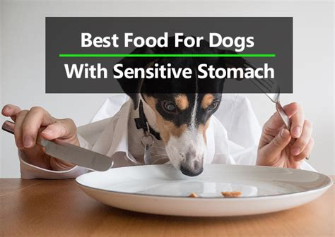 best puppy food for sensitive stomach top 10 best food for sensitive stomach 2017 crittersitca