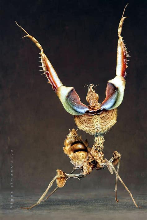 black friday on amazon uk igor siwanowicz photography mantis 22 171 why evolution is true