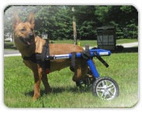 when is a no longer considered a puppy 8 best images about help for handicap pets on plays wheels and for dogs