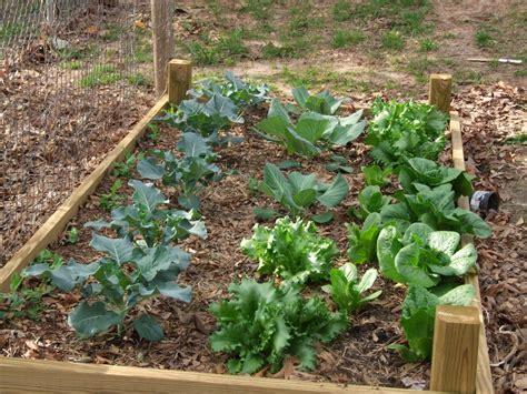 Small Wood Raised Bed Backyard Vegetable Garden House