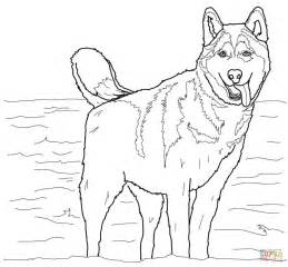 Coloring Pages Of Huskies siberian husky coloring coloring