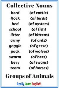 Collective Nouns Stairs by Collective Nouns Group Nouns