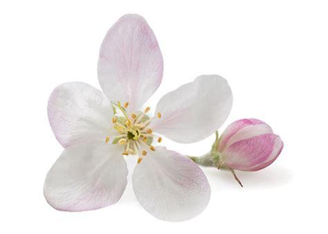 test fiori bach erboristerie fiori di bach cosa sono e a cosa servono