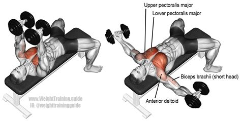 bench press flys dumbbell fly exercise instructions and videos weight