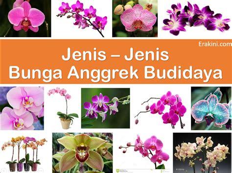 Jenis Jenis Tanaman Anggrek 20 jenis bunga anggrek khas indonesia ini cocok untuk budidaya