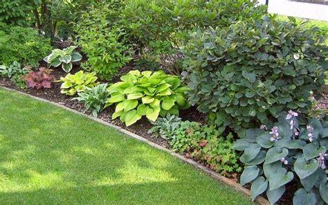 wann tannen schneiden einpflanzen pflanzen beginn einer dankbaren