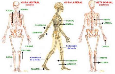 anatoma para posturas de posici 243 n anat 243 mica posici 243 n de referencia