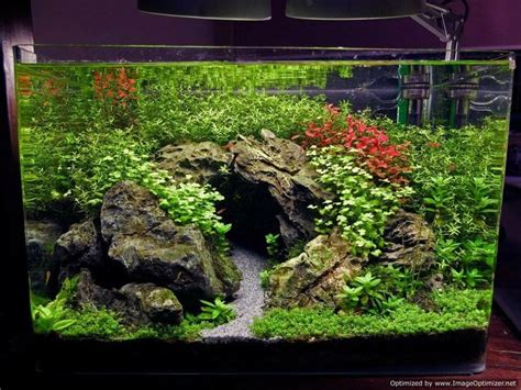 Aquascape Ideas by 25 Best Ideas About Aquascaping On Aquarium