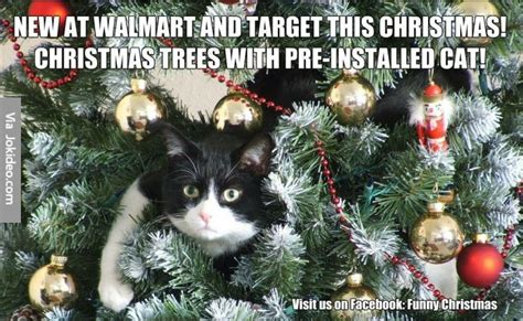 Christmas Cat Meme - cat in christmas tree meme