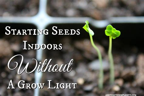 starting seeds indoors lights starting seeds indoors without a grow light