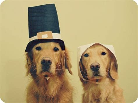 thanksgiving puppy 23 pets who are not enjoying thanksgiving theblaze