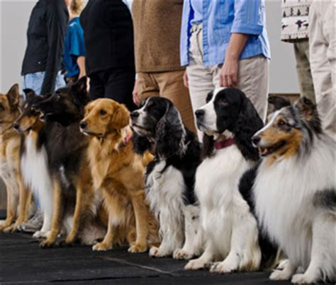 how much is obedience for dogs survey results how much do vetstreet readers do