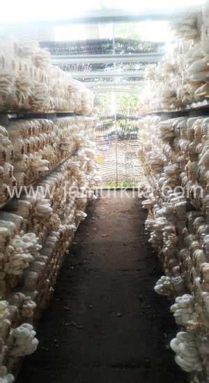 kumbung rak jamur tiram  rangka baja jamur kita