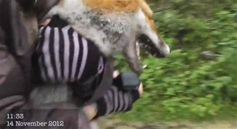 www perro coje a mujer una mujer salva la vida de un zorro que estaba siendo