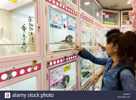 pet shop puppies puppies for sale in pet shop tokyo japan stock photo royalty free image 30542269