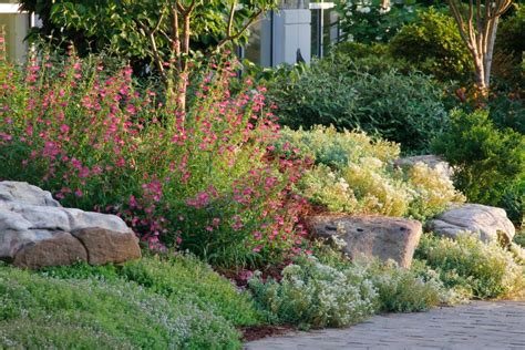 Create A Rock Garden Tips For Success Hgtv Plants For A Rock Garden