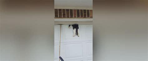 cat garage door cat in garage door saved by deputy abc news