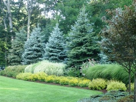 evergreen landscaping evergreen shrubs and grasses on