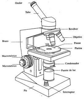 imagenes de un microscopio para dibujar faciles pasos para el uso del microscopio miranda26 s weblog