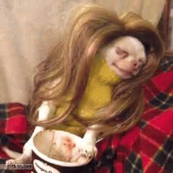 Dog in a wig eating ice cream reverse gif best funny gifs and