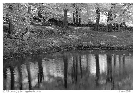 black  white picturephoto pond  tree reflections