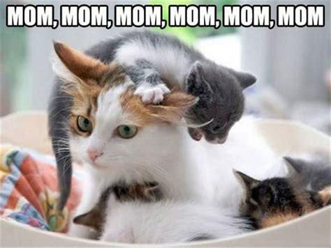 Cat Mom Meme - mom mom mom mom kittens memes and comics