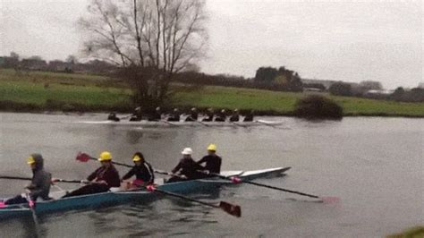 row boat sport rowing gif find share on giphy