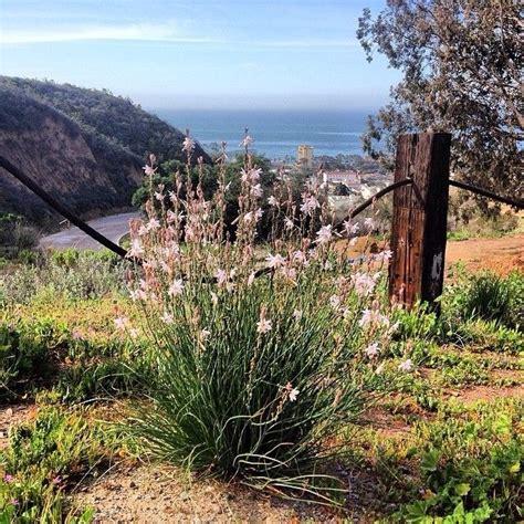 Pin By Visit Ventura On Ventura Attractions Pinterest Ventura Botanical Gardens