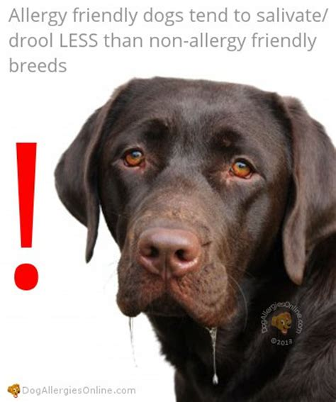 non allergic dogs characteristics of an allergy friendly