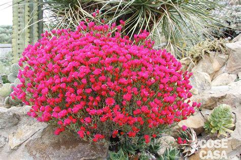 fiori di cactus piante fiori di cactus cose di casa