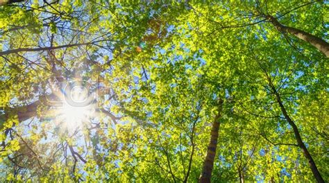 top 10 pictures of trees for day summer sun shining through canopy of trees sunlight in deciduous forest summer