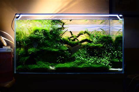 how to aquascape a freshwater aquarium aquascaping freshwater aquari sequa