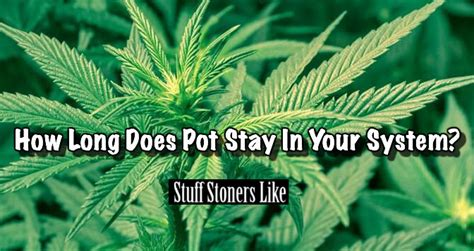 How Does The Stuff Detox Stay In Your System by How Does Pot Stay In Your System For Various Tests