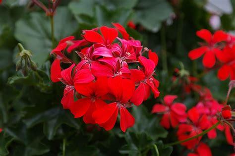 fiori per terrazzi al sole 5 piante perfette per un terrazzo al sole lombarda flor