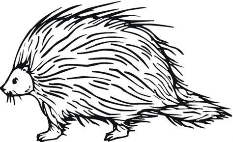 porcupine coloring pages cliparts co