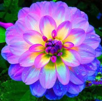 Imagenes De Las Flores Mas Lindas Del Mundo Imagenes De | im 225 genes de flores hermosas y bonitas rosas exoticas de