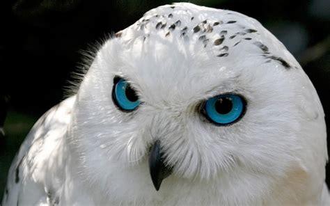 blue eyed blue bright colors wallpaper 18226427 fanpop