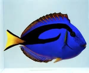 Oceans Direct   Exotic Saltwater Aquarium Fish ? Custom Fish Tanks