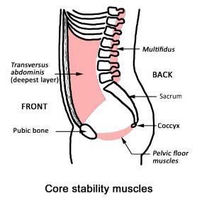 step plan  managing  prolapse step  pelvic floor muscle training bracing functional