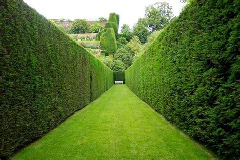 piante da giardino prezzi piante da siepe prezzi siepi costo delle piante da siepe
